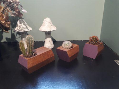 pots-cactus